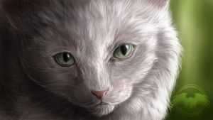 ...::: White Kitten - SP :::... by AmorpheusArt