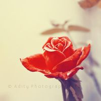 Rosy.. by addy-ack