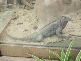 Reptiles 019 by Kowia