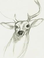 Deer Sketch by venkman3000