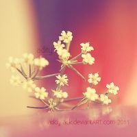 Little flowers... by addy-ack