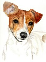 Jack Russell Terrier by RamonaQ