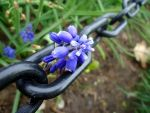 Blue Flowers and Chains by NematophagousMites