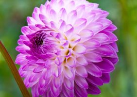 Flower power 009 by picmonster