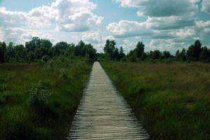 Wooden Path Stock 3 by BirdsistersStock