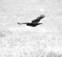 Crow9497 by filmwaster