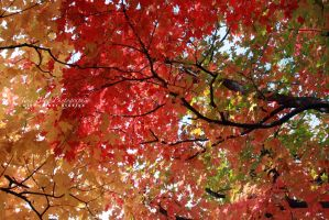 Fall Colors by hyperetic