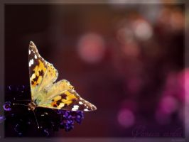 The Painted Lady by evionn