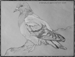 Carrier Pigeon by Ryurules