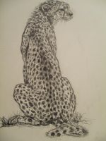 Cheetah by whitetrash3
