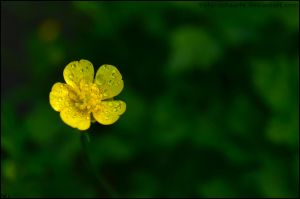 Yellow in green by Tiefenschaerfe