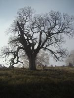 The Dead Tree by Travis-Person