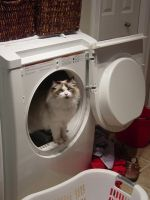 my cat in the dryer by mcm1011