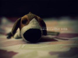Smile... little dog by pincel3d