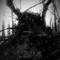 The Roots of a Tree 2 by Jude-Monteleone