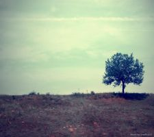 Lonely Tree 4 by Iulia-Oprinesc