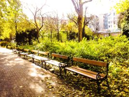 benches in park by Wonderer1000