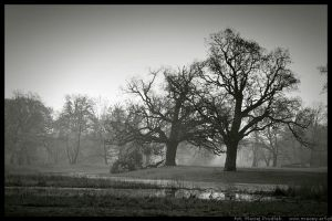 Two Trees by mprudlak