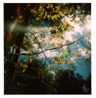 Leaves and Light by SWCameraEyes