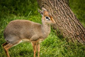 Baby Deer by BradleyDeano