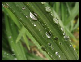 Water Droplets by Random101Girl