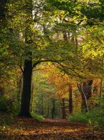 Autumn Path by George---Kirk