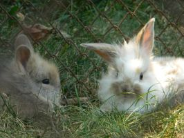 Rabbits by AndraLC