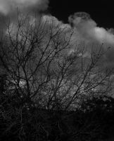 Tree and the sky by vaavesur