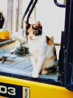 JCB Kitty by MiDulceLocura