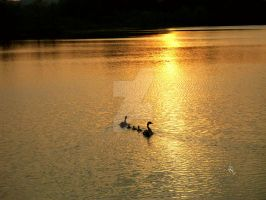 Family Sunset by njbartworks