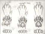 Guardian's paws (sketches) by engineerx