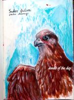 #230 Saker Falcon (falco cherrug) by Doodle-of-the-day