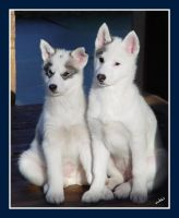 Bilka and Oobloo at 9 weeks by Volklet