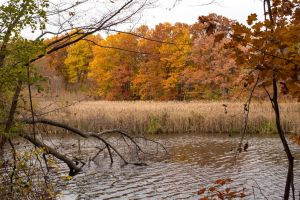 Autumn Leaves and Reeds by elvaniel