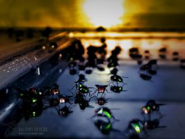 BALCONY OF FLIES by JTphoto