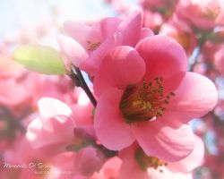 Moments of Spring 6 by love1008