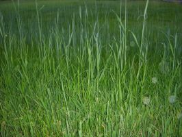 Grass by CizreK