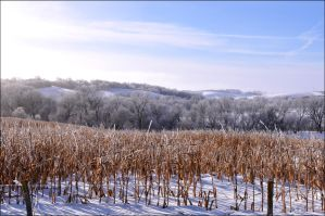 Corn field in Winter by bacardi870