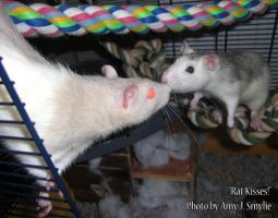 Rat Kisses by AmyJSmylie