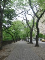 Central Park NYC by Bellasartbook