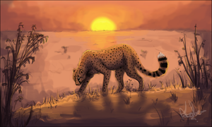 Cheetah by Chakkaa