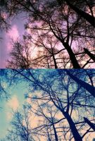 trees and sky... by littleEvi