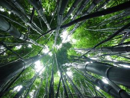 bamboo heavens by nimfaru
