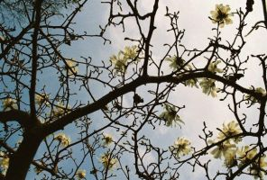 flowering tree 2 by TuNages