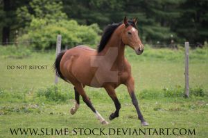 bay ottb trot by slime-stock
