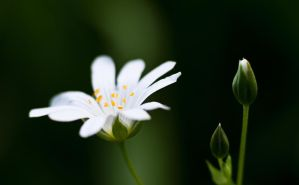 white flower by mARTinimal