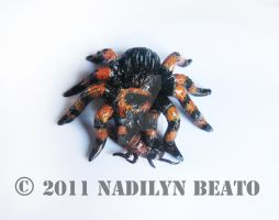 Mexican Red-Kneed Tarantula by NadilynBeato