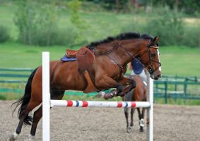 Horse jumping with no rider by dressageart13