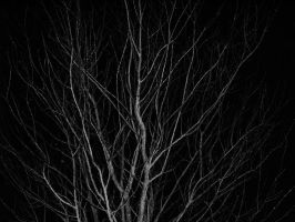 Night Tree by king00Nayr