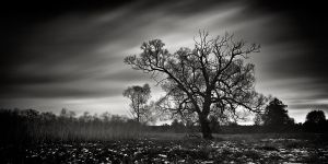 Tree whispers by EmilStojek
